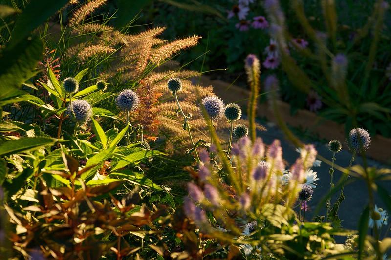 garden august morning  2002