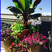 Healthy Happy Flowers— Lafayette Florist, Gift Shop & Garden Center in Lafayette, Colorado