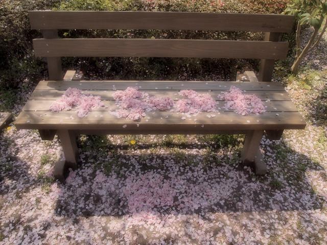 A  Sakura bench