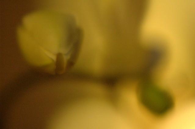 123/366: A punto de orquídea
