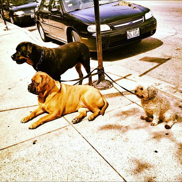 Wicker Park Dog Daycare