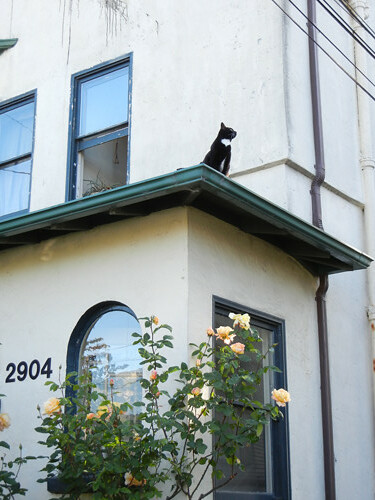 Cat on Rooftop _ 8679