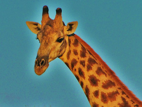 Long-necked Gazer by CharlesRay2010