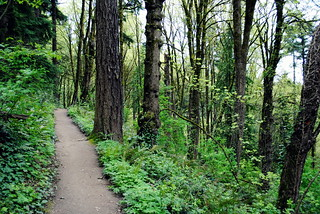 Inside Washington Park - Portland, Oregon