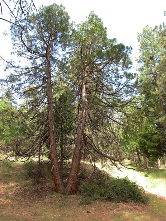 050312_07_idyll_pine