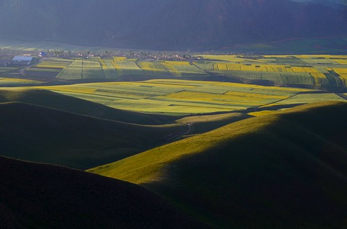 china morning light shadow sun mountain nature field sunrise pattern shine sunny mel shade melinda 青海 rapeseed 油菜花 qinghai rapeseedfield 田 油菜花田 quilian chanmelmel melindachan 祈連
