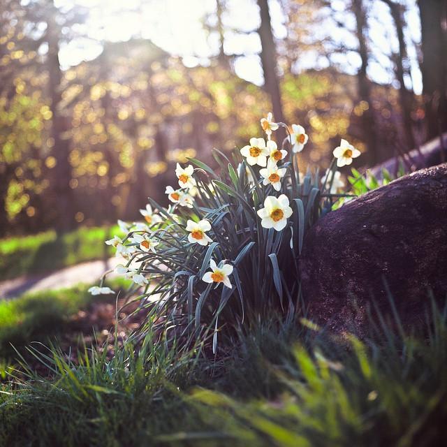 Petit printemps