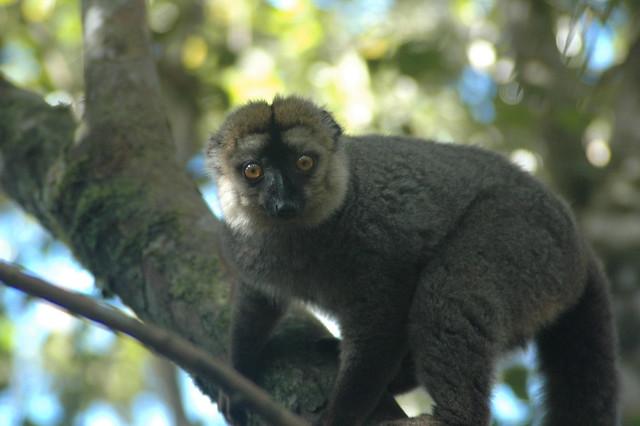 Récits du voyage à Madagascar