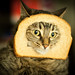 Breading Cats-7