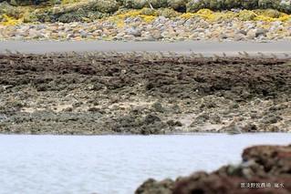 藻礁所形成的地景之美,無以言喻。(攝影:呂東杰)
