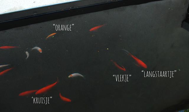 Den Hof. Vissen met een naam.