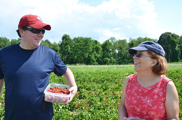 strawberry picking at butler's orchard