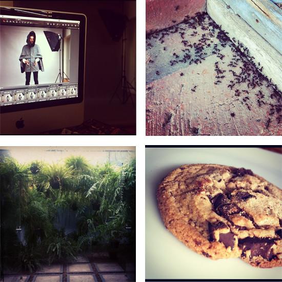 eleph_instagram3