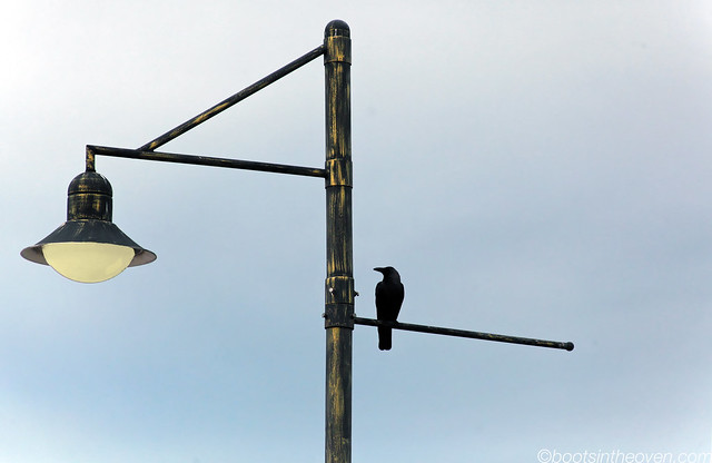 Crow raven craven?