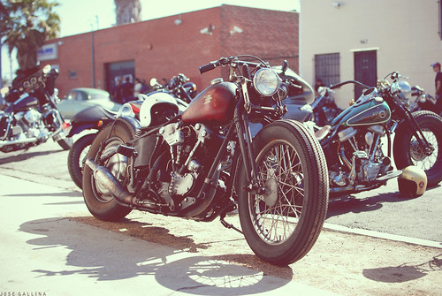 Kiyo's Knucklehead by southcount