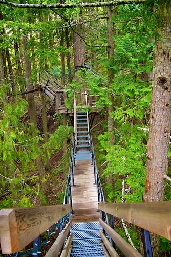 TreeTrek Whistler