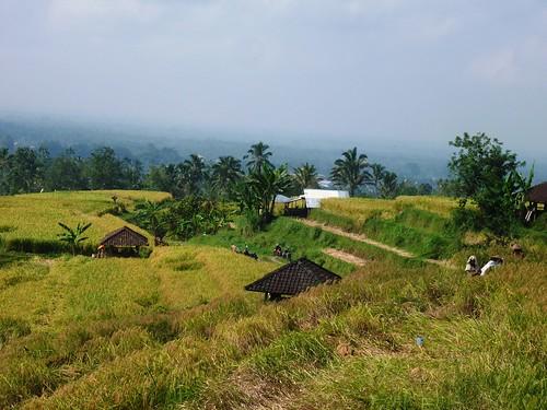 Bali-Route Legian-Jatiluwih (67)