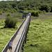 Passerelle de bois du Parc écologique de l'Anse du Port / Wooden walkway of Parc écologique de l'Anse du Port