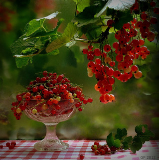 Summer Delight (Currants)