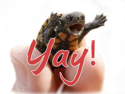 turtle yay