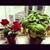 "My lil bebe windowsill ""garden"""
