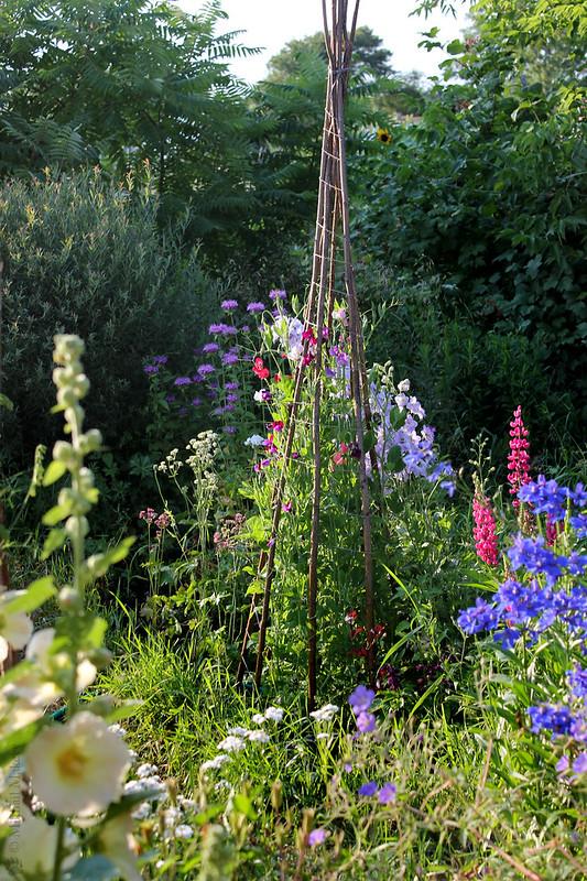 Sweet pea on obelisk. Lathyrus odoratus 'Spencer mixed' & 'Fragrantissima' — Душистый горошек на самодельном обелиске 'Spencer mixed' & 'Fragrantissima'