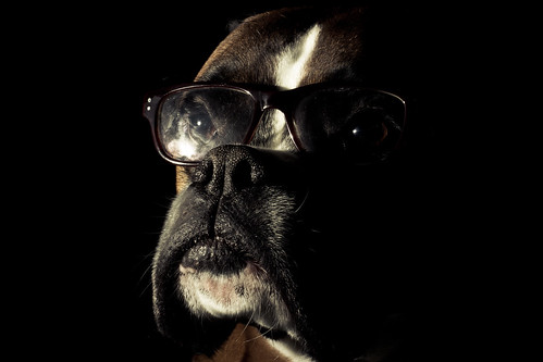 Dog In Glasses (explored)