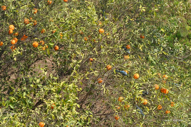 Comiendo mandarinas