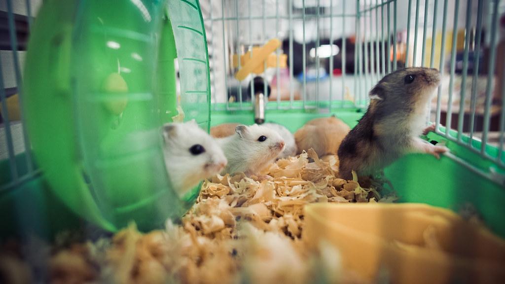 有戲老鼠團,有戲人生。