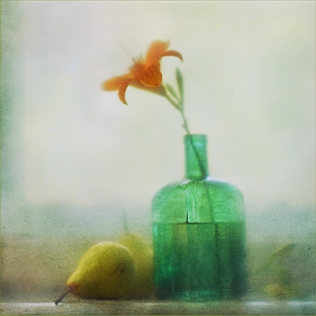 Lily Dreams - Creative Still Life Photography