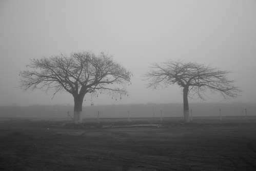 Trees soaked in the fog -CSC_1183e1