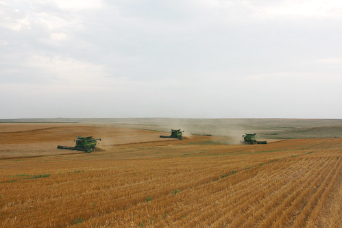 Three combines cutting in Bowdle