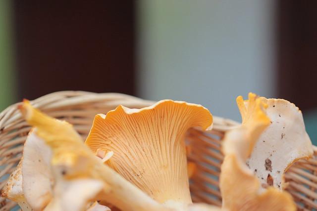 fungi bounty