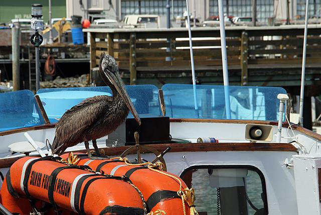pelicanwharf0109