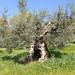 Il Cervo Rampante - L\'Azienda