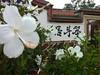 瓊林159號民宿(笨斗居)前門