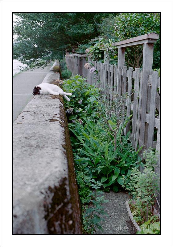 塀の上の昼寝 #1 / Sleeping on wall #1