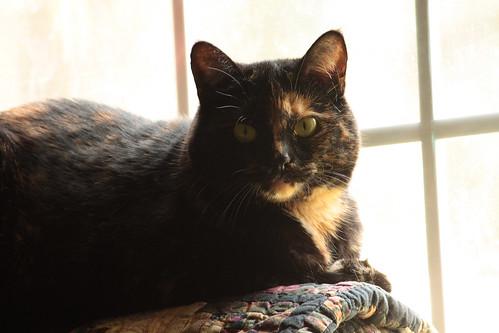 Lucycat
