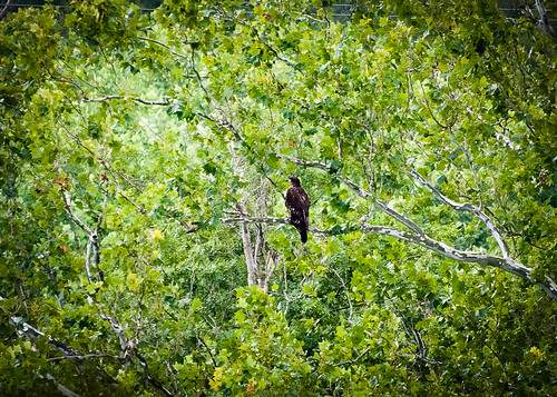 b_youngEagles120801_12979