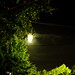 Small photo of Moss Green Moon