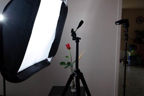 Rosa de Sant Jordi - Setup