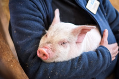 Baby Animals at Hancock Shaker Village - Pittsfield, MA - 2012, Apr - 06.jpg by sebastien.barre