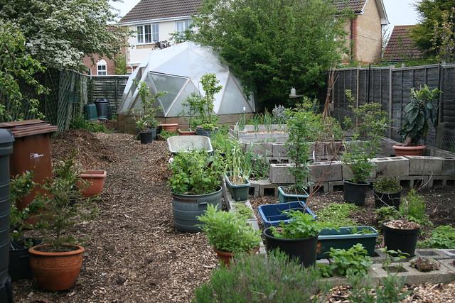 My former garden