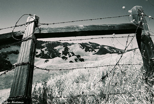 Beyond the Leaning Fence by Wayne-K