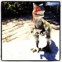 Found Dino