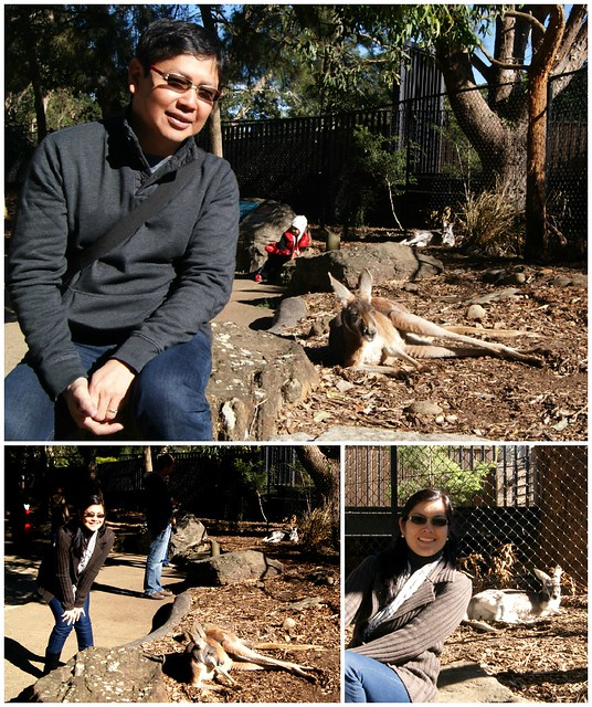 __03 kangaroo