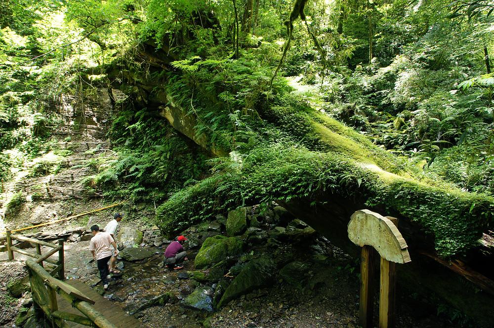 巨木群,與往拉拉山的路上-058