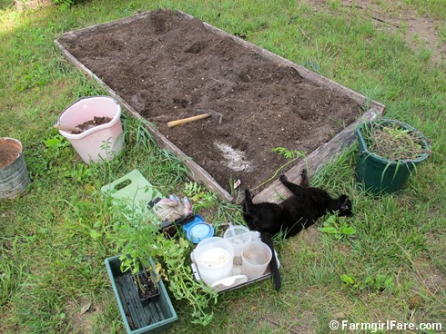 (25) Planting tomatoes in the kitchen garden with Mr. Midnight - FarmgirlFare.com