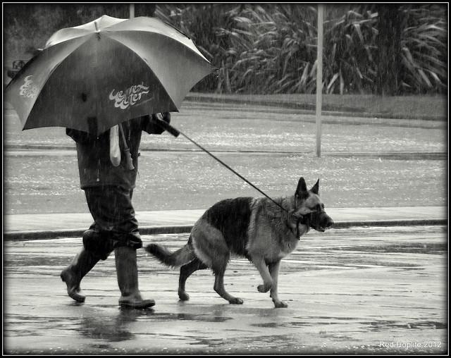 Walking the Dog in, Fujifilm FinePix S2995