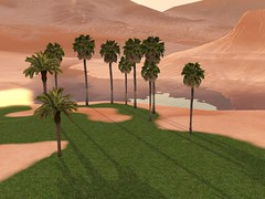 Palm Trees.jpg-large